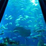 清水港 水上バス乗船レビュー!東海大学海洋科学博物館(三保水族館&恐竜博物館)楽しみ方!